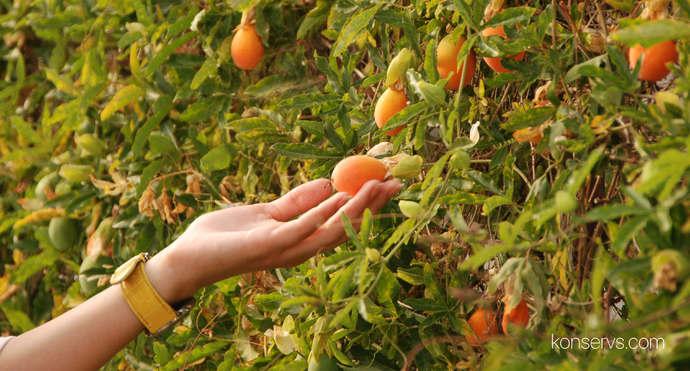 Странные фрукты в Каннах