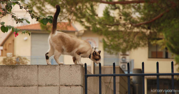 Котик где-то на улицах Канн