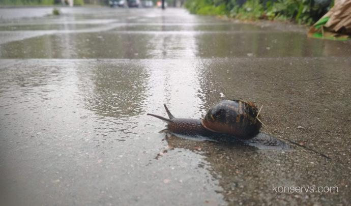 Улитка после дождя